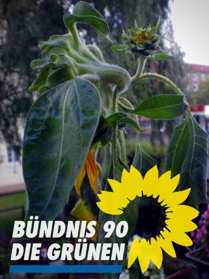 Foto einer verwelkenden Sonnenblume, deren zweite Blüte zum Scheitern verurteilt ist. Darunter das Parteienlogo von Bündnis 90/Die Grünen mit der stilisierten Blüte einer Sonnenblume im Logo